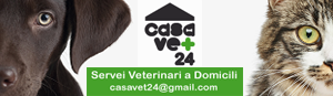 CasaVet24