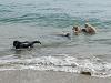 Passejada amb gossos a la Platja de la Platera de l'Estartit