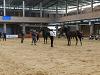 Campionat de Catalunya de Cavalls de Pura Raça Espanyola
